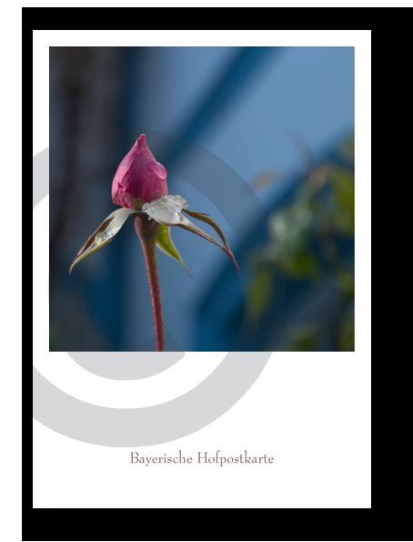 Bayerische Hofpostkarte_21050C