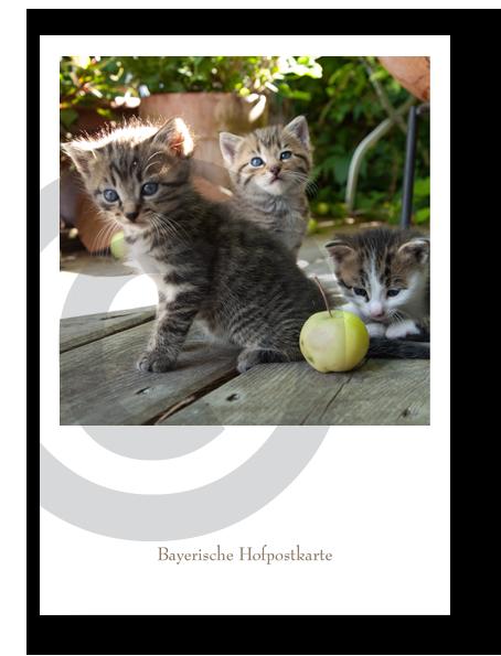 Bayerische Hofpostkarte_21104C